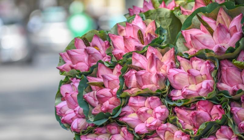 Ngủ mơ thấy vợ được người yêu cũ tặng bó hoa sen chốt cặp 51 - 19.